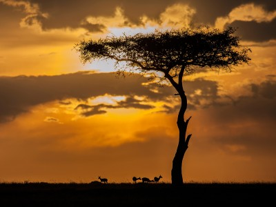 Sunset in the Maasai Mara (1/2)