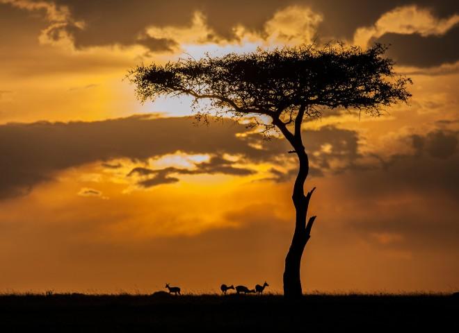 Sunset in the Maasai Mara (1/2)
