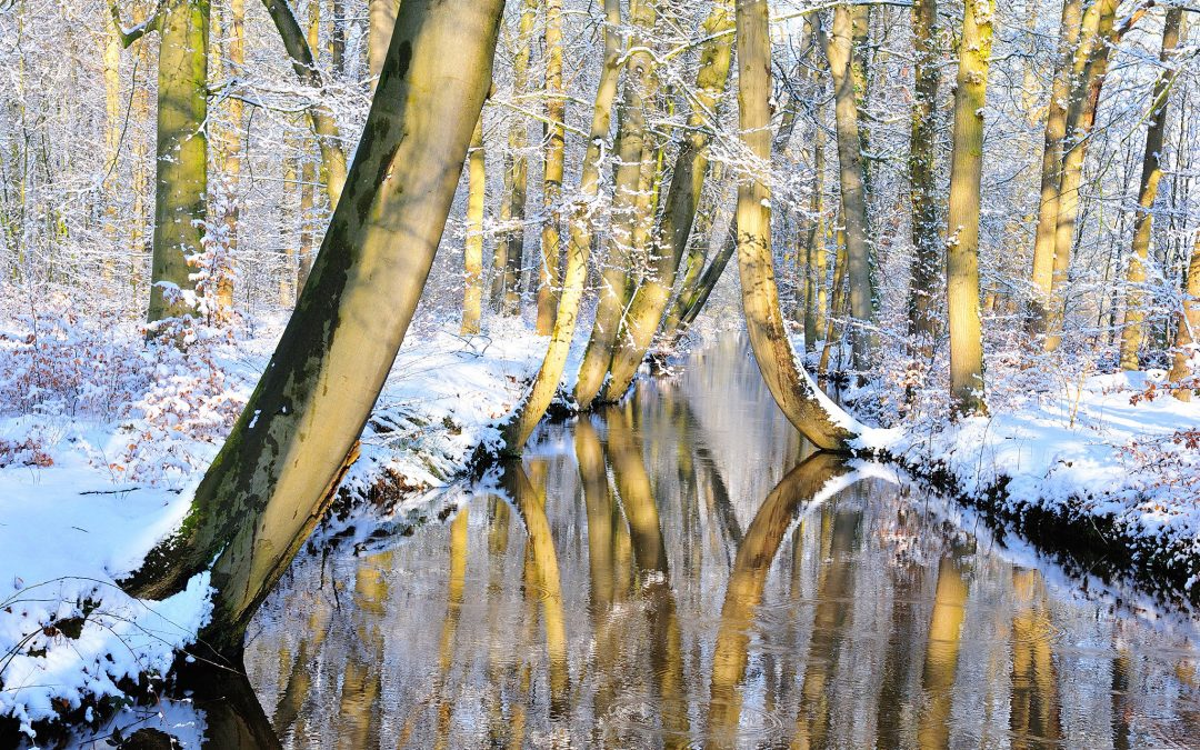 Bending trees – Landgoed Twickel