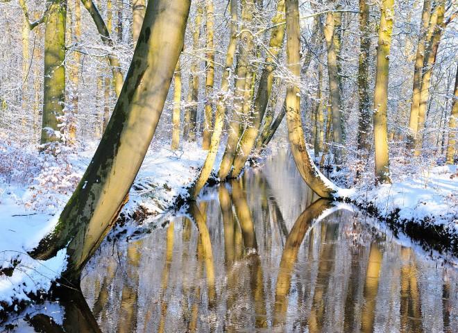 Bending trees – Twickelervaart (The Netherlands)