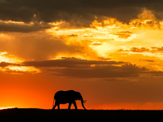 Lonely elephant in the sunset (Kenya)