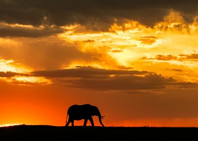 Lonely elephant in the sunset_DSC7599