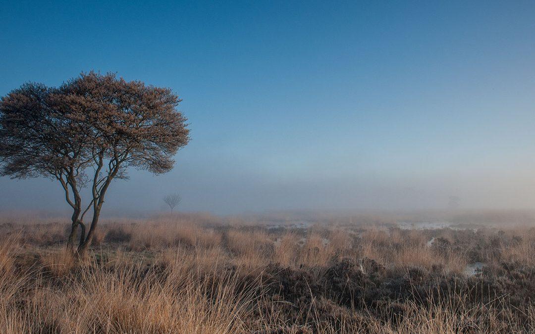 Early rise at Elsenerveld, Wierden