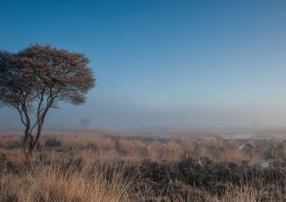 Dutch nature