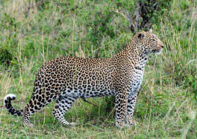 _DSC6027-2_Leopard