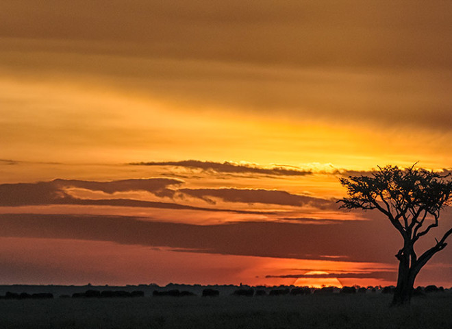Sunset in the Maasai Mara (2/2)