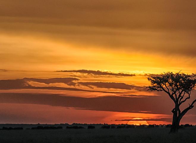 Sunset in the Maasai Mara (2/2)