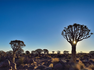 Sunset at Quivertree forest