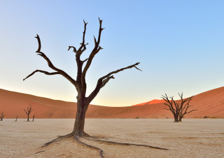 Tree in Deadvlei