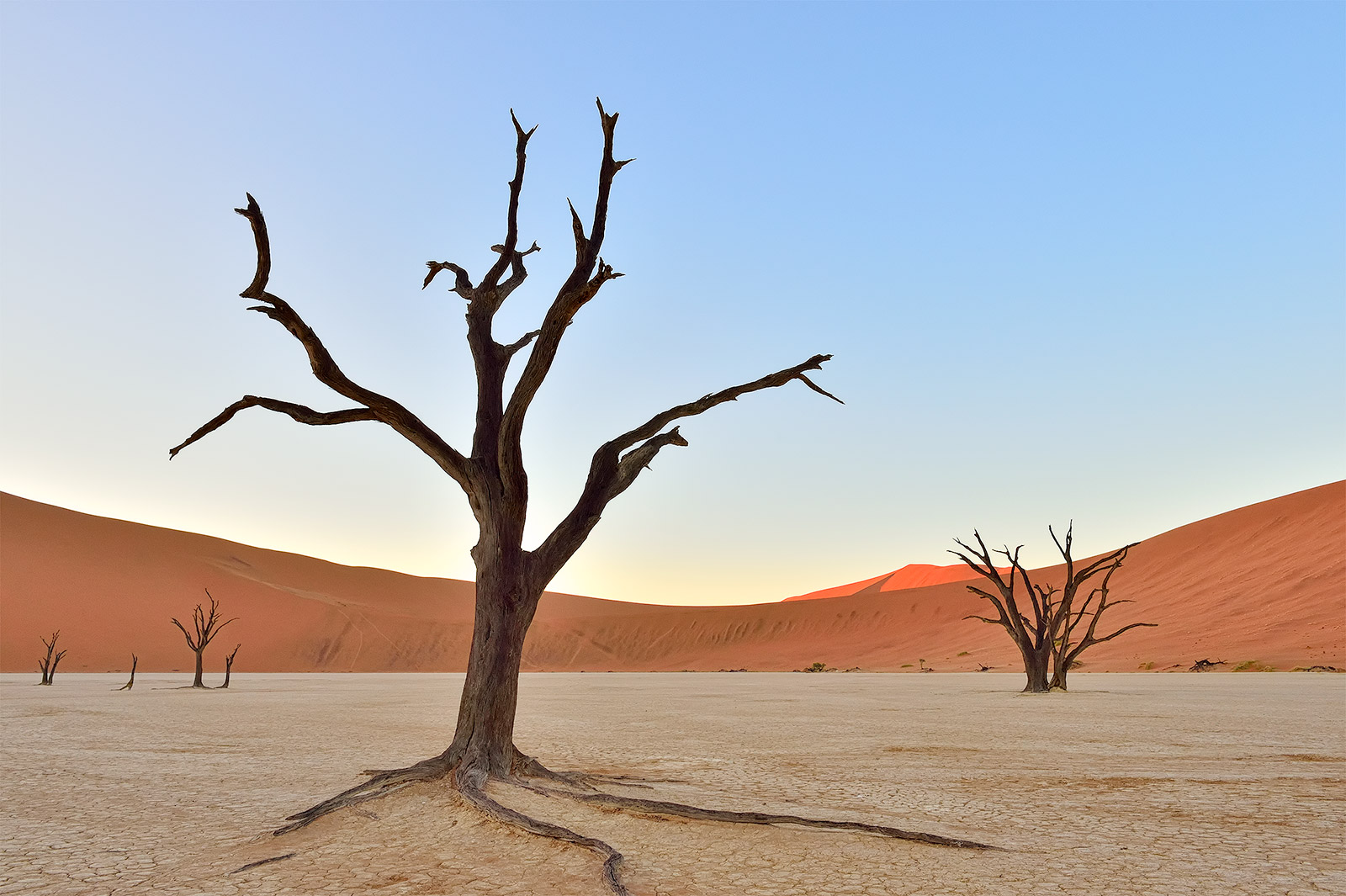xsmp 20131001 7431 deadvlei tree xsmp 20131001 7475 namibia deadvlei xsmp 20131001 8088 startrail sossus dune lodge xsmp 20131002 8093 brown hyena