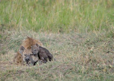 XsMP_DSC5722_Hyena_with_cub_Masai_Mara
