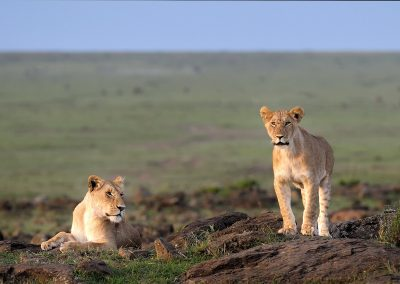 XsMP_DSC5819_Two_Lions_Masai_Mara_wb