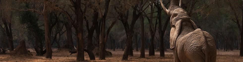 Zambia Impressions (Lower Zambezi NP)
