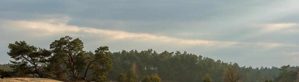 Sunset in Kootwijker sanddunes
