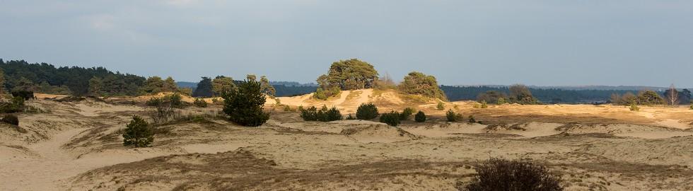 Last sunlight in Kootwijker sanddunes