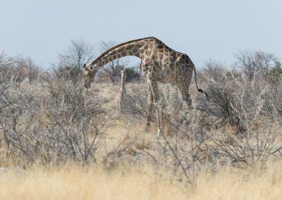 mp20180913_namibia_0068.jpg