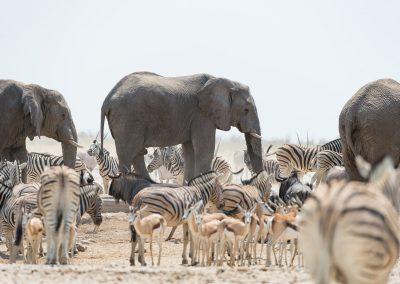 mp20180914_namibia_0348.jpg