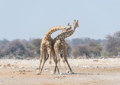 mp20180917_namibia_0219.jpg